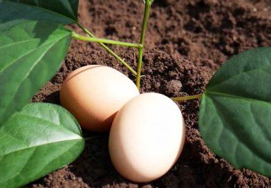 Egg Tree Real or Fake